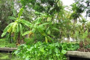 Filipíny - za obry a trpaslíky